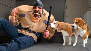 Dogs Vs Funny Cop Prank : Funny Dogs Louie and Marie