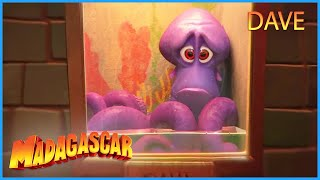 DreamWorks Madagascar | Dave's Story | Penguins of Madagascar Clip | Kids Movies