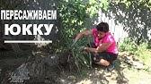 Купить семена мелотрии колибри (мини арбуз) почтой в Москве .