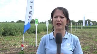 CORTEVA AGRISCIENCE™ - демо поле в с. Могила, пролетници