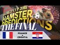 World Cup 2018 Finals Hamster 'Predictions': France v Croatia