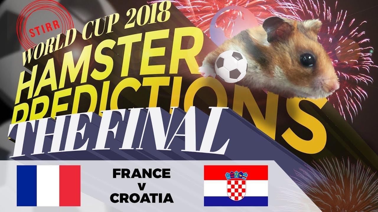World Cup 2018 Finals Hamster 'Predictions': France v Croatia