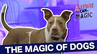 Dogs, Coffee, & Magic - Anyone Can Magic