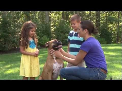 Allersearch Pet+ Pet Shampoo / Pet+ Oatmeal Dog Shampoo