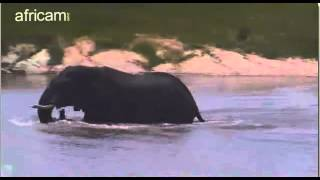 Afryka  Idube, Słoń