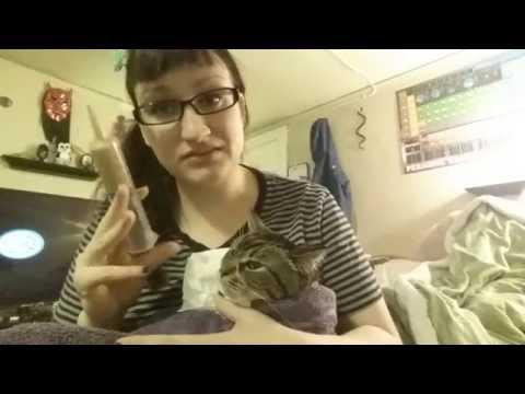 syringe-feeding-a-sick-cat