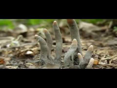 Mirip jari tangan orang, ternyata, MENGERIKAN!!! berita harian terbaru indonesia video viral seru