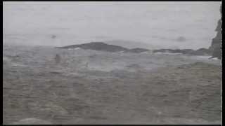 FRANK ZAPPA -- AYBE SEA