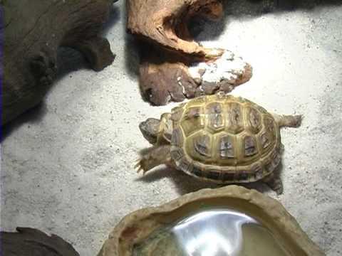Черепахи купаются - YouTube