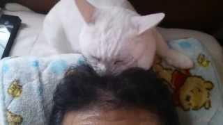 宮崎あおい 佐藤健 【映画】世界から猫が消えたなら に出たい猫 名前は...