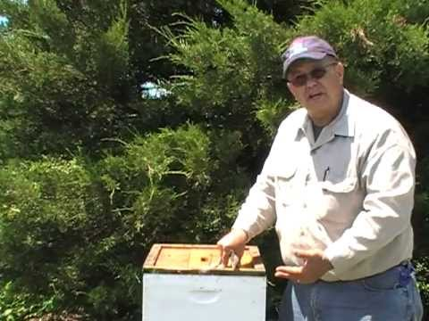 NJBA hive inspections with Tim Schuler 2012