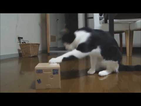 Funny Cats Compilation - Best FUNNY CAT Videos Ever