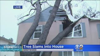 Westwood Home Is Red-Tagged After Fallen Tree Does Heavy Damage