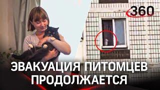 17 кошек выжили во взорвавшемся подъезде в Ногинске. Эвакуация животных началась
