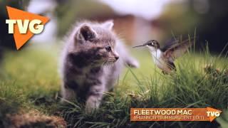 Fleetwood Mac - Rhiannon (Summerscent Edit)