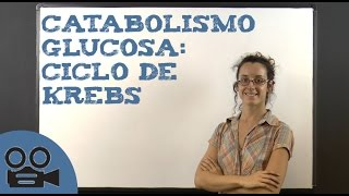 Catabolismo glucosa: ciclo de Krebs