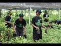 Plantations International Agarwood Nursery