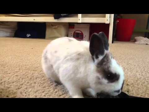 How to get your Rabbit to come when called