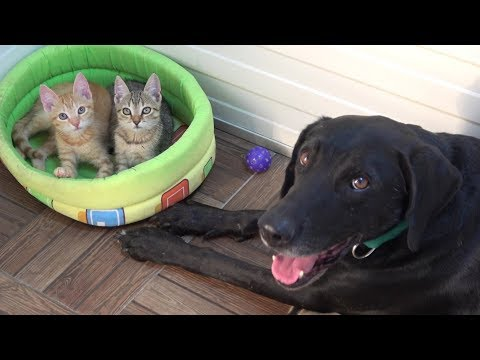 Tiny Kittens Found Abandoned On Road Now Have A Special Foster Dog Dad | CAT RESCUE