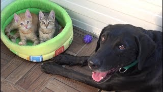 tiny-kittens-found-abandoned-on-road-now-have-a-special-foster-dog-dad-cat-rescue