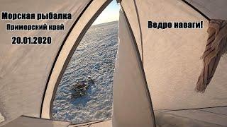 Приморский край Морская рыбалка Навага