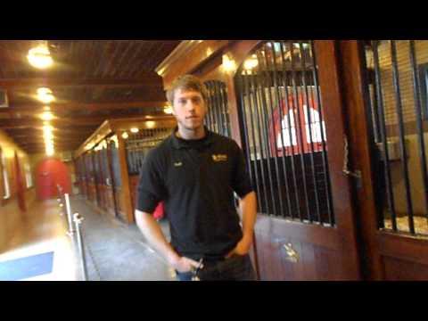 budweiser-stables-merrimack,-nh