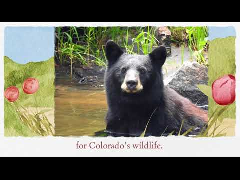 Born To Be Wild - Recreation And Wildlife At Denver Water