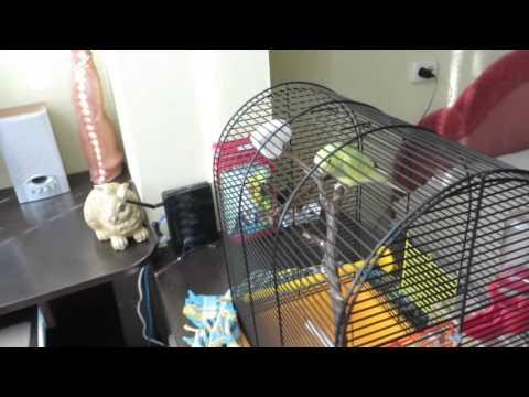 Приручение попугая День1.ч1 Попугай нахохленный, не ест, не пьёт