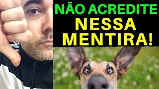 NÃO ACREDITE NESSA MENTIRA sobre adestramento!| Adestramento de Cães| Adestramento canino