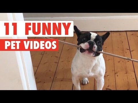 11 Funny Pets Video Compilation 2016