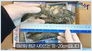 바다해 블랙타이거새우 10미 500g