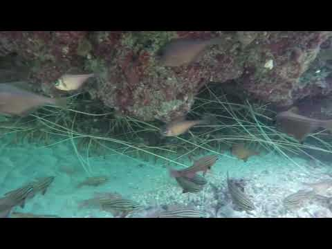 Crayfish Freediving - Western Australia