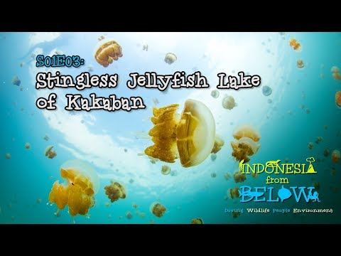 Stingless Jellyfish Lake Of Kakaban Island [4K] | Indonesia From Below (S01E03) | SZtv