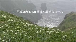 平成28年5月26日桃岩展望台コース