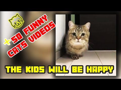 Funny Cat Video Compilation 2019 | Try Not To Laugh Challenge 2019 | Best videos funny cats #1