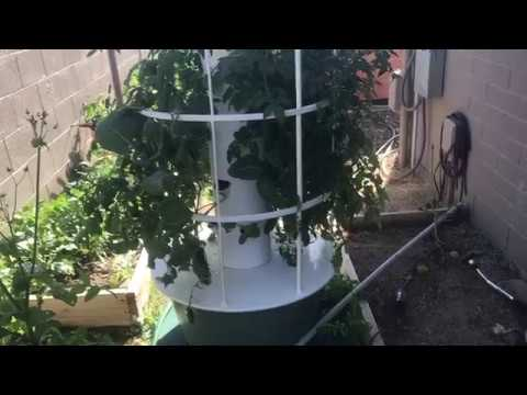 Tower Garden and Soil Garden