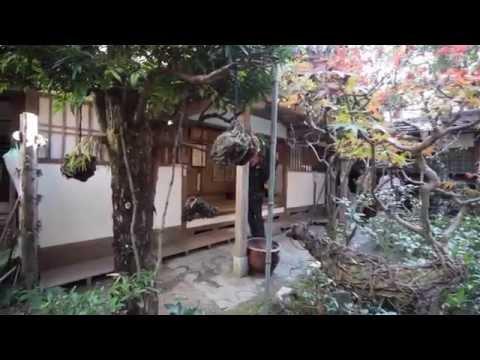 Kōzan-ji, Autumn 2014, Kyoto.
