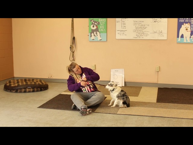 Dogs Who Serve- Training a Pattern Interrupt for a Service Dog- Utah Service Dog Training