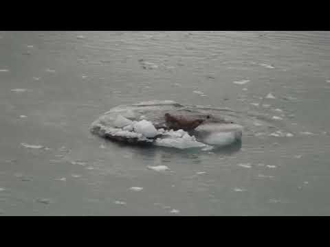 Glacier Bay 2012