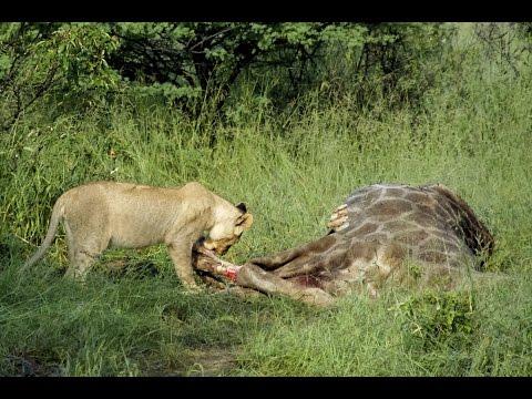 5300km across Africa to Witness Wildlife Extinction