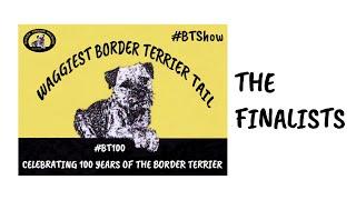 #BTShow  Waggiest Border Terrier Tail