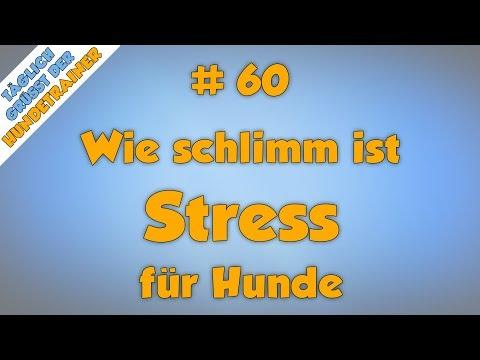 TGH 60 : Ist Stress wirklich so schlimm?