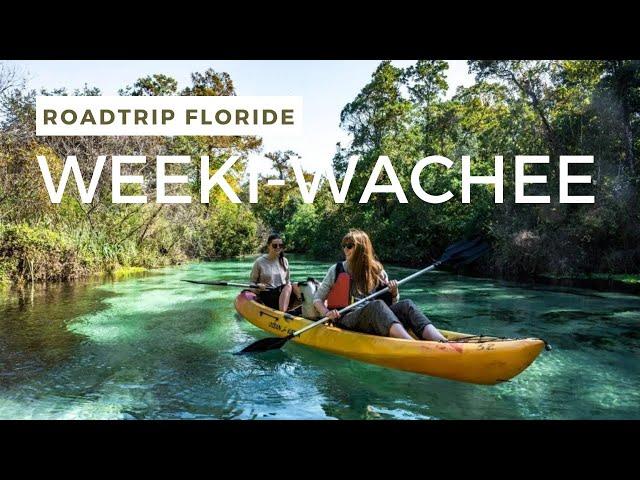 Rencontre avec les LAMANTINS à Weeki Wachee River - Road trip Floride #4