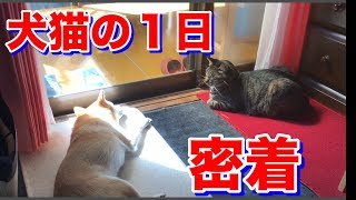 柴犬と猫と過ごす1日に密着!(前編)【柴犬ハナと猫クロ】