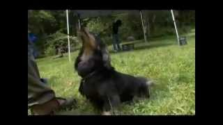 Pet4you.gr: Dogs Dachshund - Βραχύτριχη Ντάσχουντ