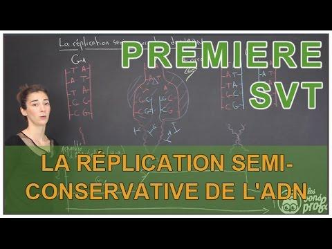 La réplication semi-conservative de l'ADN - SVT - 1ère S - Les Bons Profs