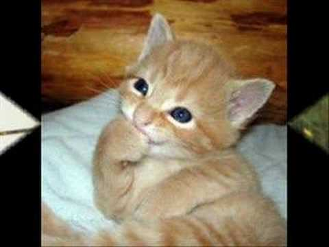 Funny Cat Pictures - YouTube