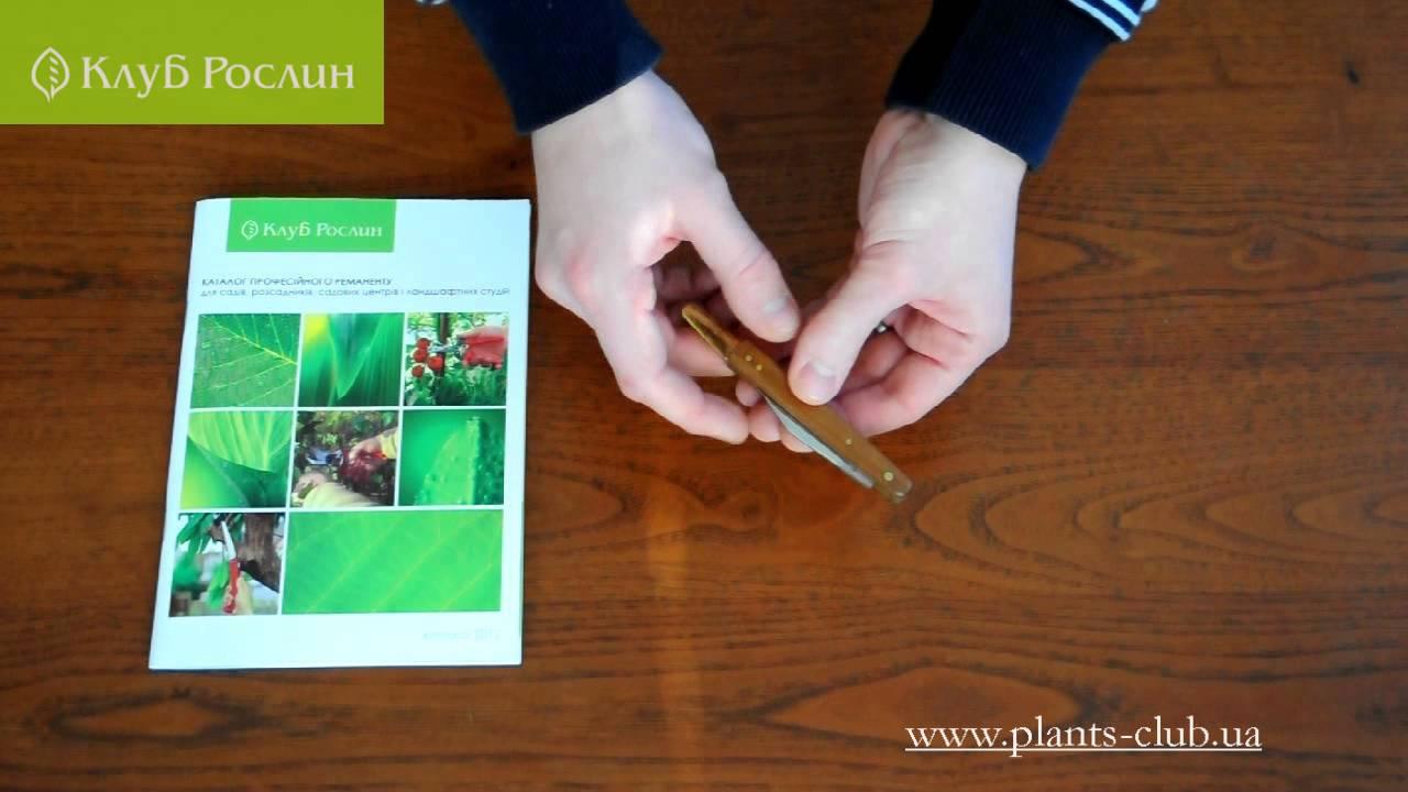 Роза) Секатор прививочный Белорусский как инструмент для прививки .