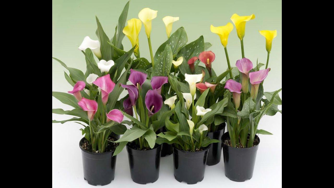 Флориум florium.ua Интернет Магазин - YouTube