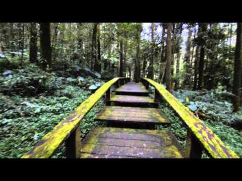 Hiking The Fenqihu Trail in Alishan National Scenic Area, Taiwan